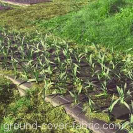 field with groundcover nonwoven fabric