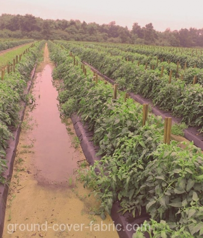 The non-woven ground cover fabric  anti-weed for crops