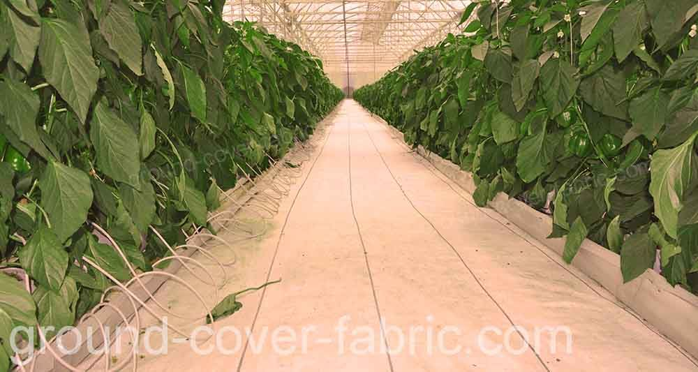 white ground cover fabric inside greenhouse