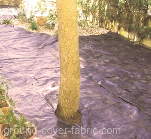 Ground cover Fabric can also be used to protect trees
